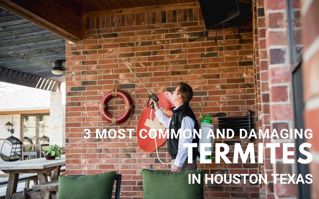 3-most-common-and-damaging-termites