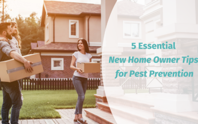 5 Essential New Home Owner Tips for Pest Prevention