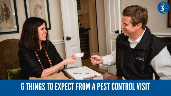 Your First Pest Control Visit: 6 Things to Expect
