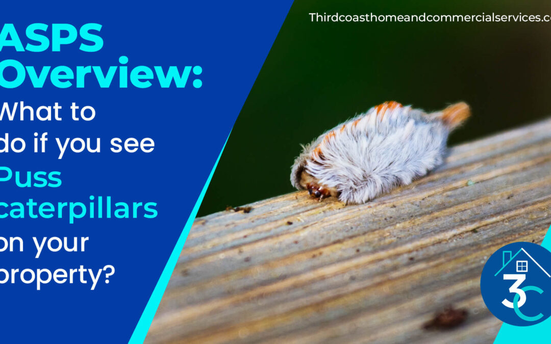 ASPS-Overview-What-to-do-if-you-see-puss-caterpillars-on-your-property