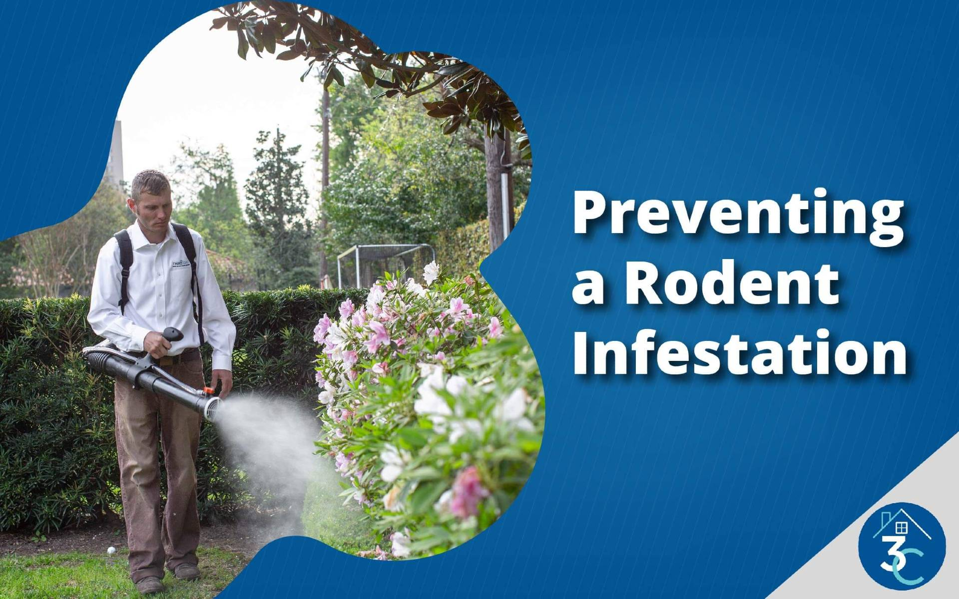 Preventing a Rodent Infestation