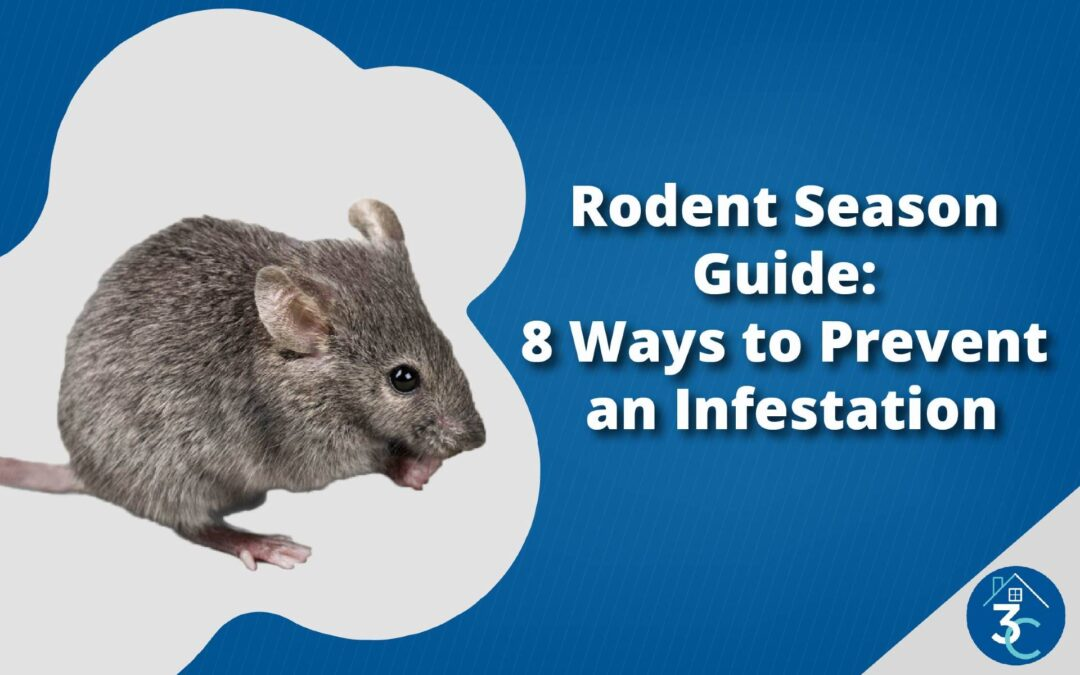 Rodent Season Guide: 8 Ways to Prevent an Infestation