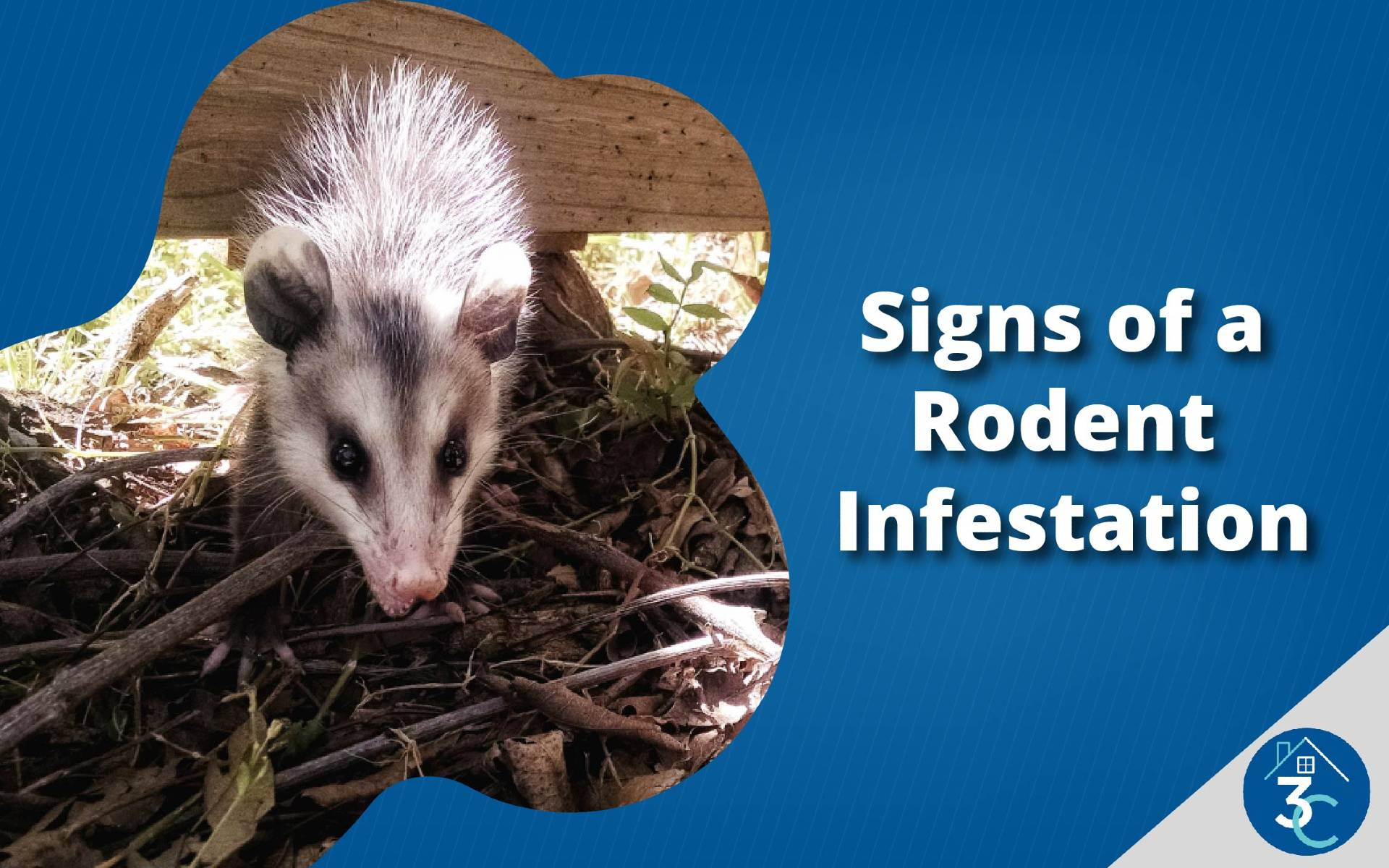 Signs of a Rodent Infestation