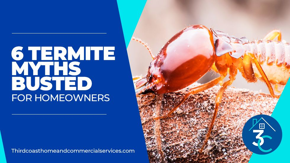 6 Termite Myths Busted for Homeowners