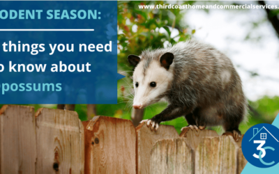 Rodent Season: 5 Things You Need to Know About Opossums